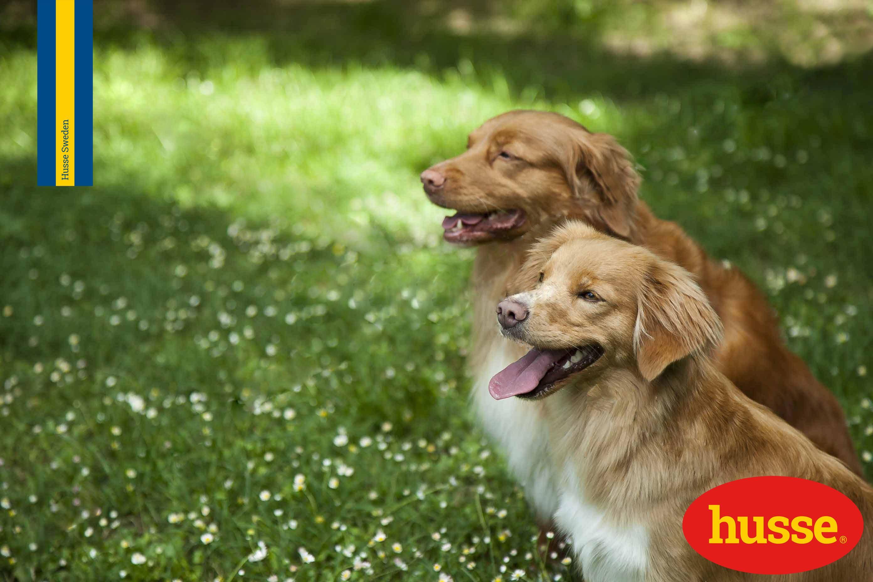 Denti dei cani: prevenzione e pulizia