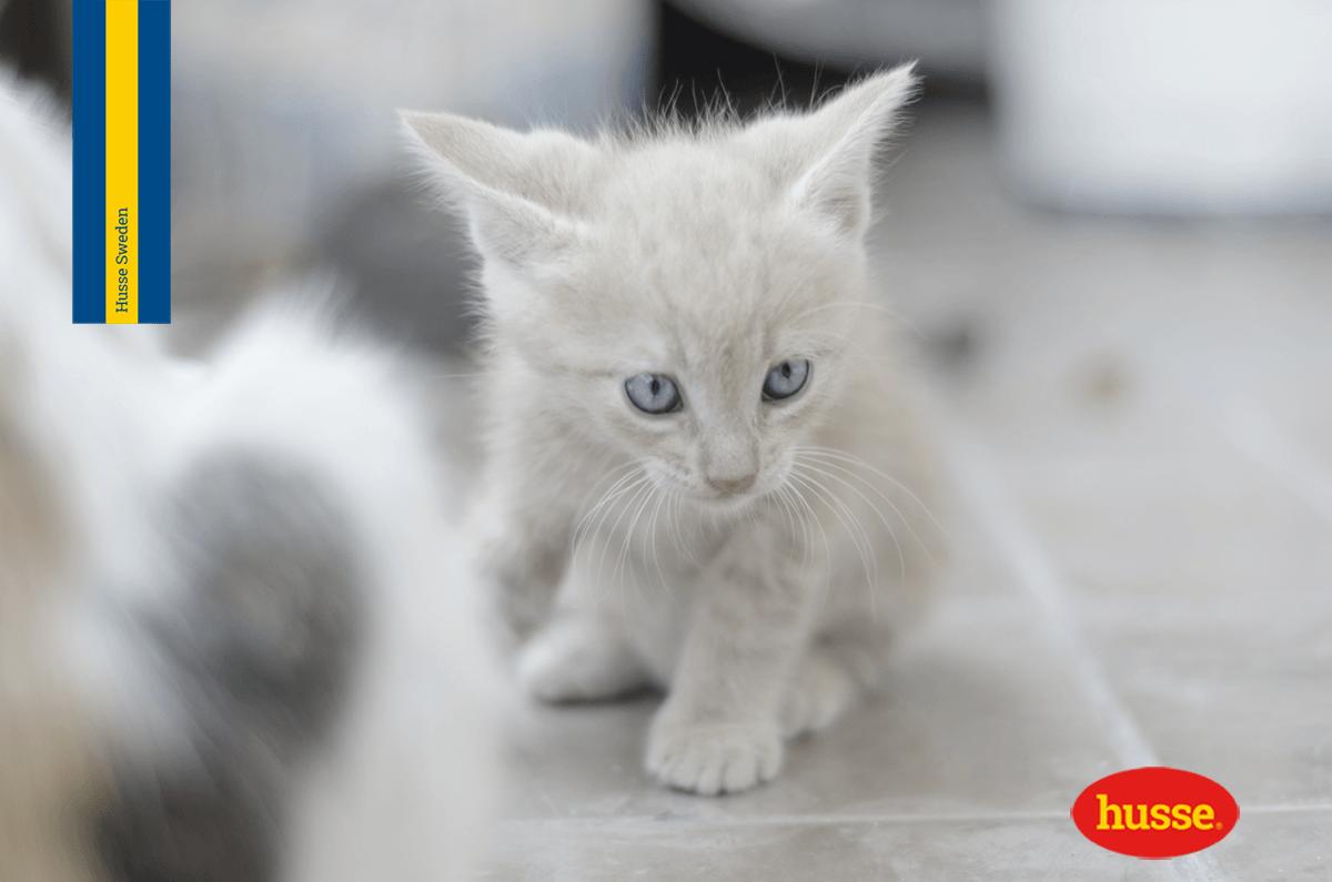 Gatto senza pelo! 5 consigli utili per sopravvivere alla muta