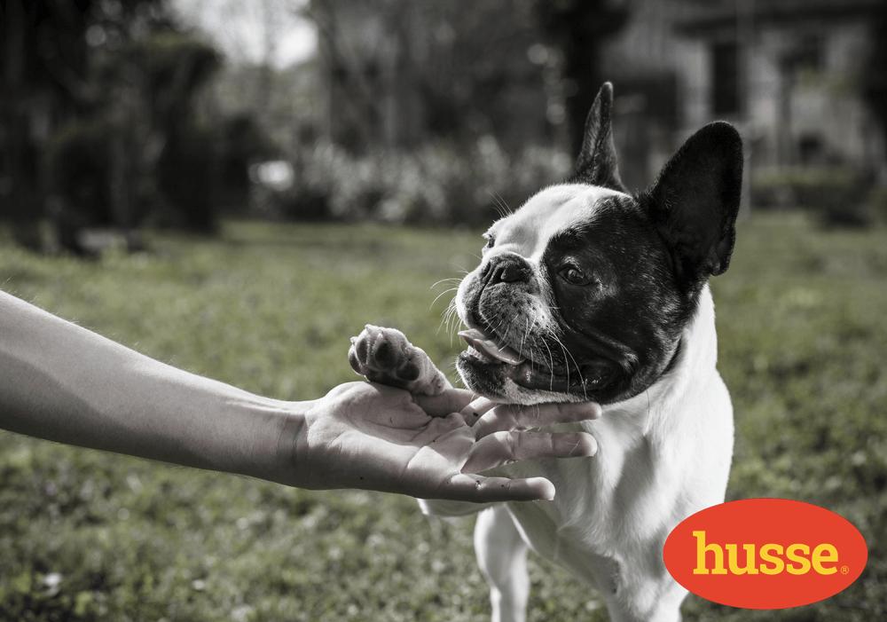 Cura dei polpastrelli del tuo cane