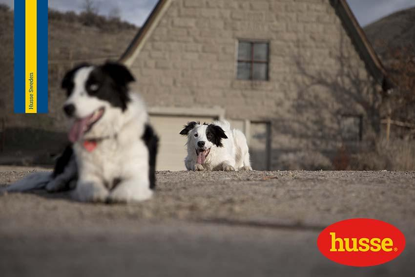 Cane in calore: 7 consigli utili