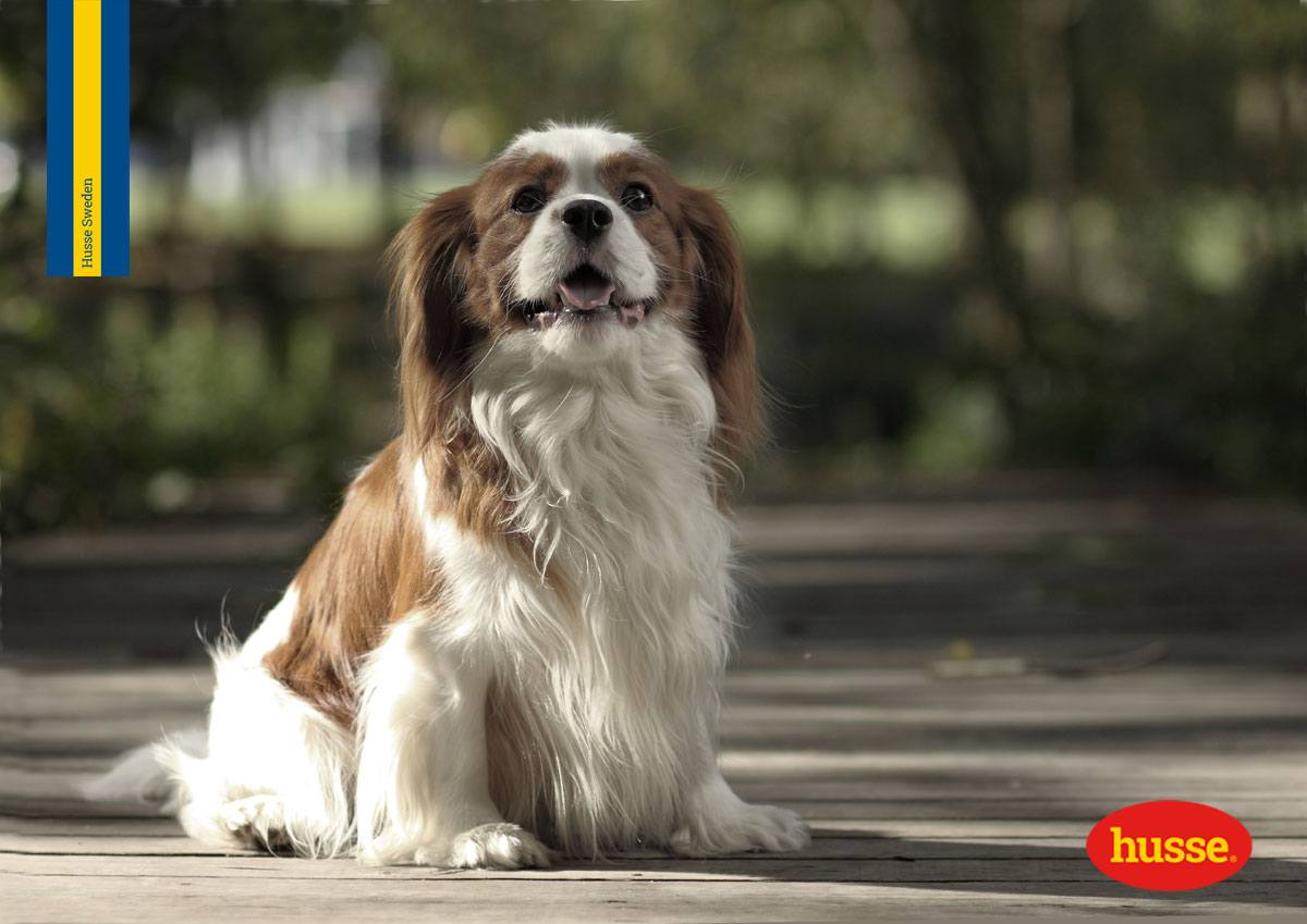 Tosse cane: cause e rimedi