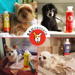 4 Prodotti naturali per lavare il cane